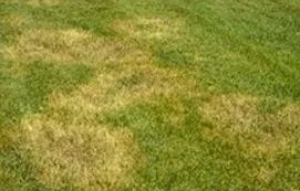 Lawn and Plant Disease