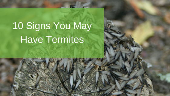 10 Signs You May Have Termites