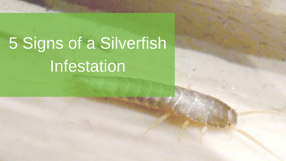 5 Signs of a Silverfish Infestation