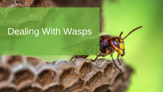 Dealing With Wasps