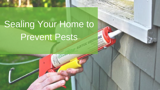 Sealing Your Home to Prevent Pests