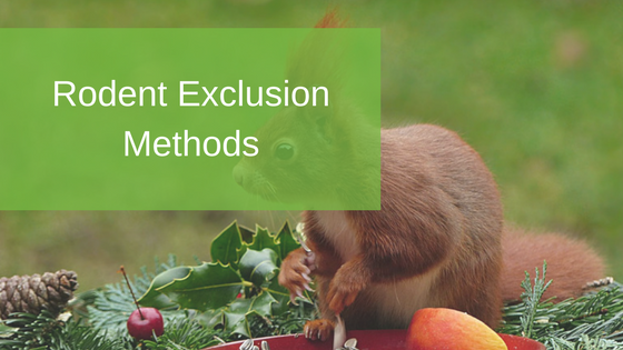 Rodent Exclusion Methods