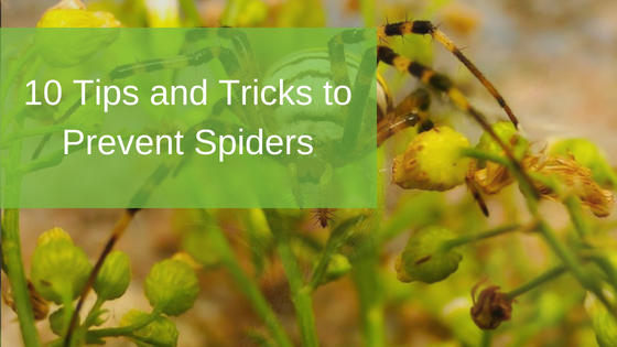 10 Tips and Tricks to Prevent Spiders