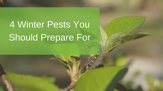 4 Winter Pests You Should Prepare For