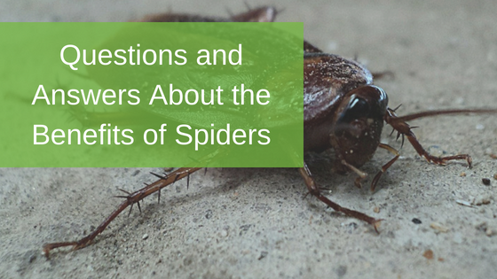 Questions and Answers About the Benefits of Spiders