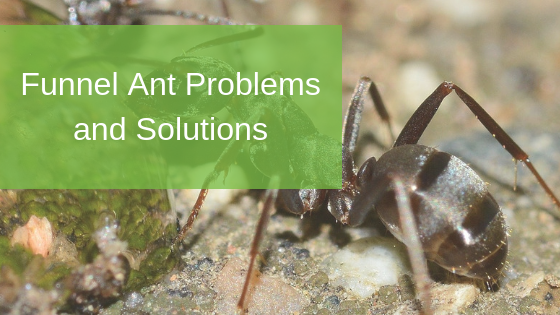 Funnel Ant Problems and Solutions