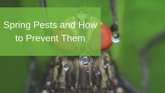 Spring Pests and How to Prevent Them