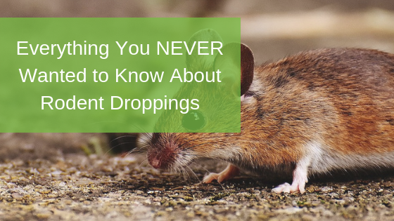 Everything You NEVER Wanted to Know About Rodent Droppings