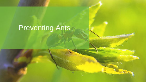 Preventing Ants