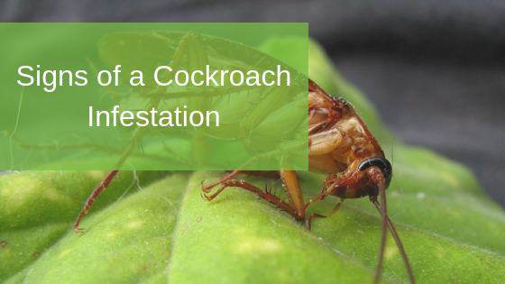 Signs of a Cockroach Infestation