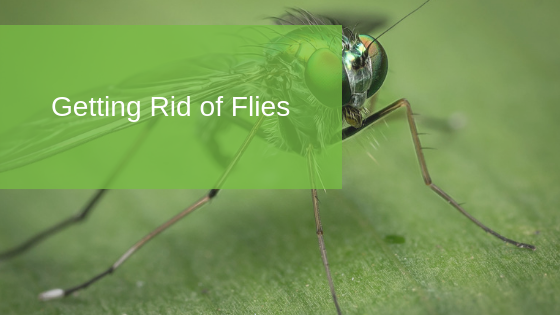 Getting Rid of Flies