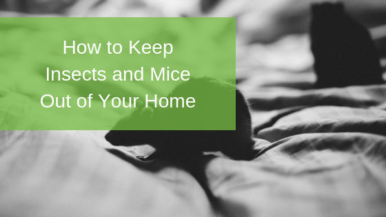 How to Keep Insects and Mice Out of Your Home