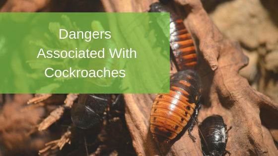 Dangers Associated With Cockroaches