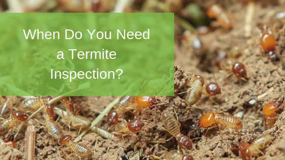 When Do You Need a Termite Inspection?