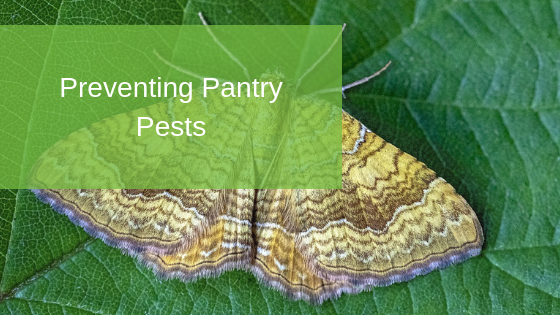 Preventing Pantry Pests