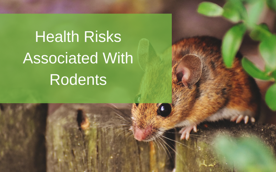 Health Risks Associated With Rodents