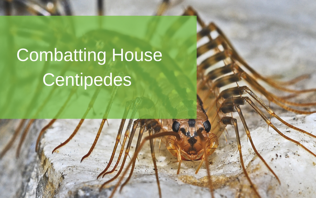 Combatting House Centipedes
