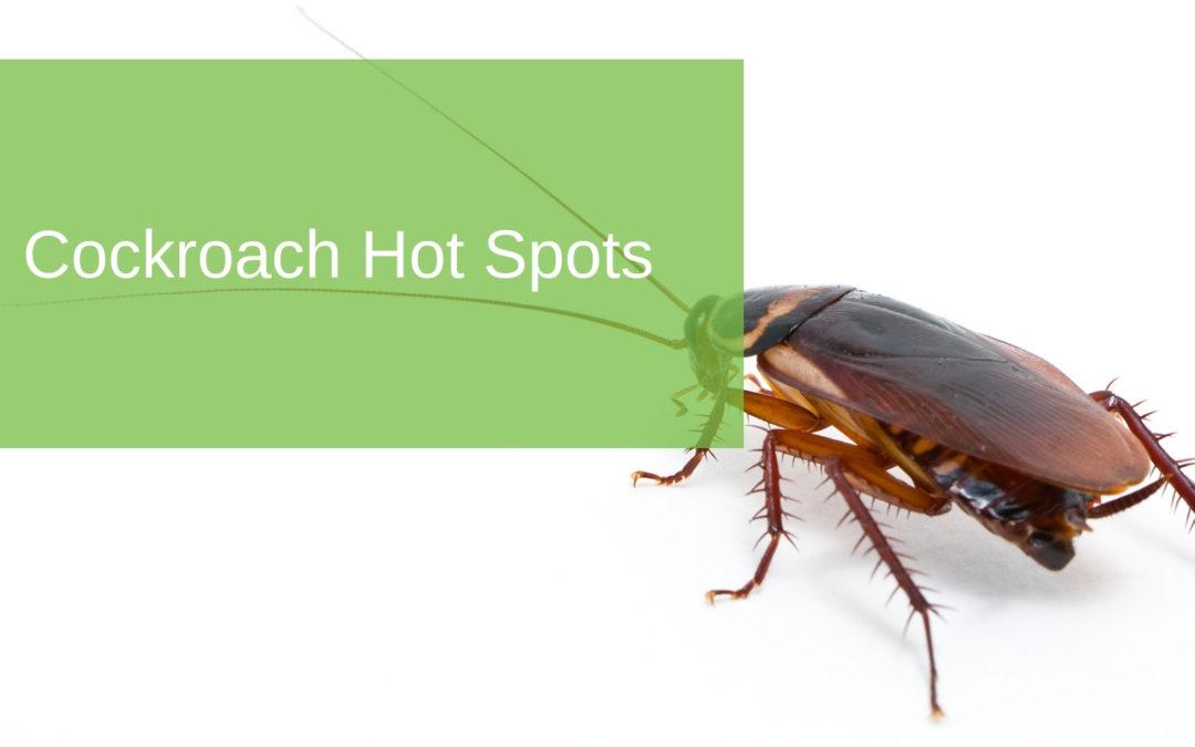 Cockroach Hot Spots