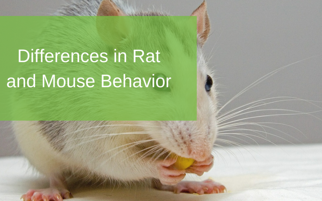 Differences in Rat and Mouse Behavior