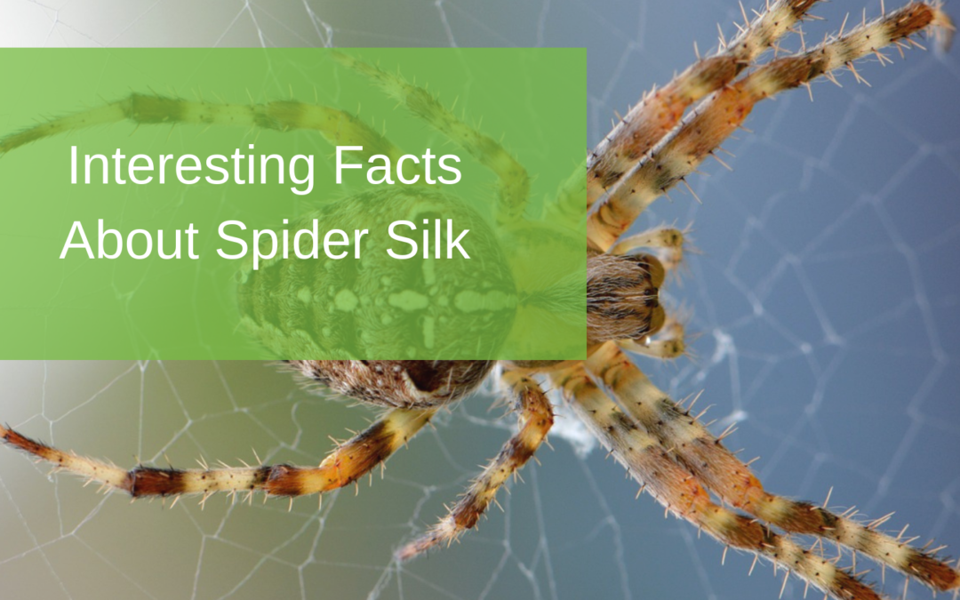 Interesting Facts About Spider Silk