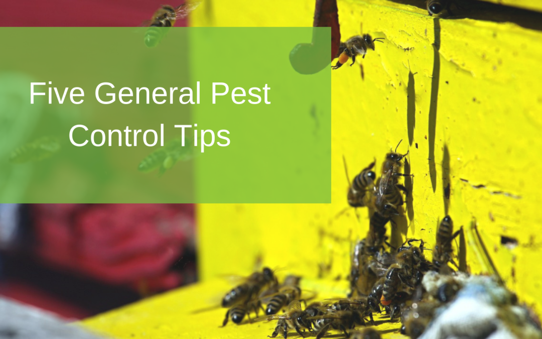 Five General Pest Control Tips