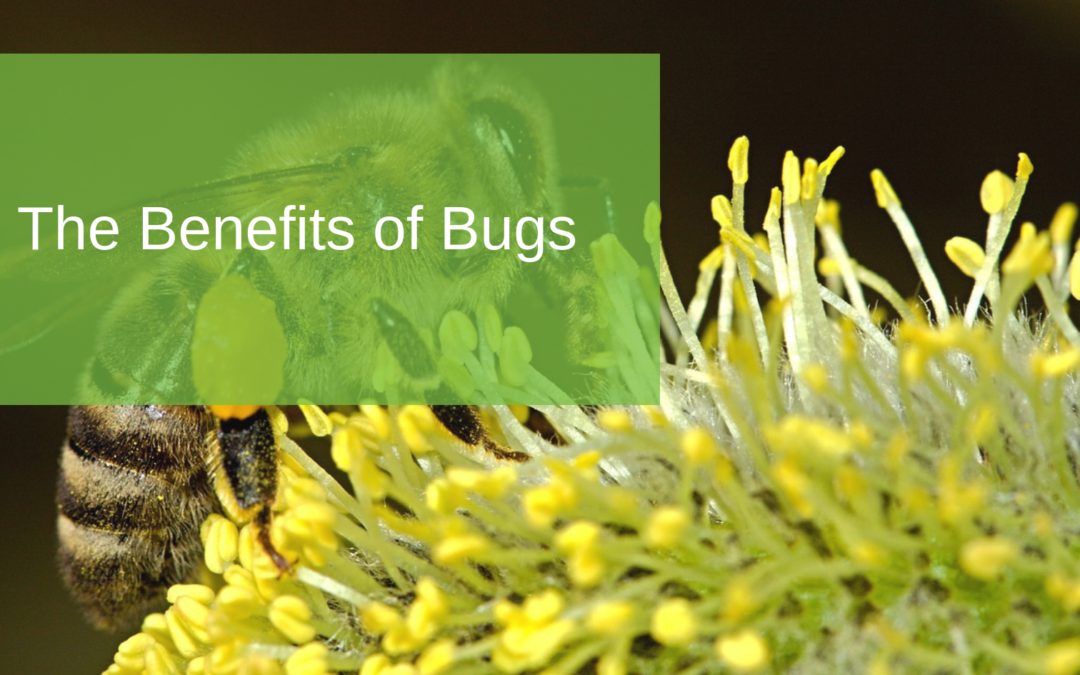 The Benefits of Bugs
