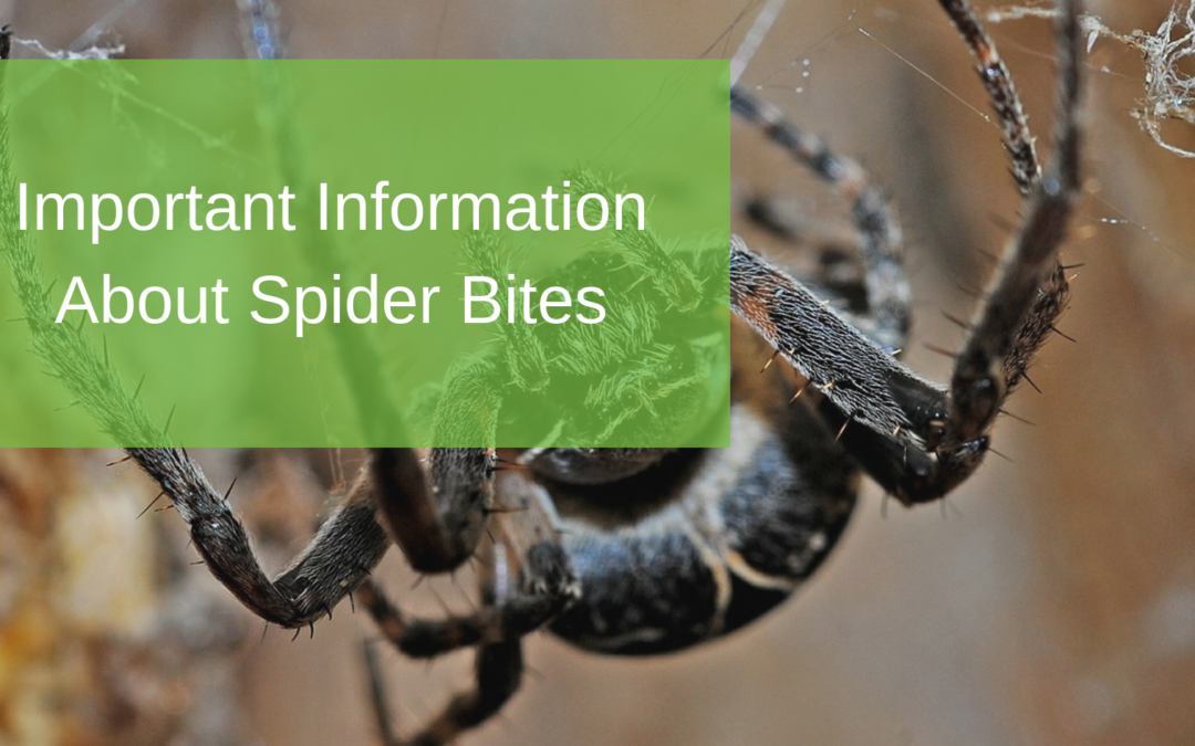 Important Information About Spider Bites