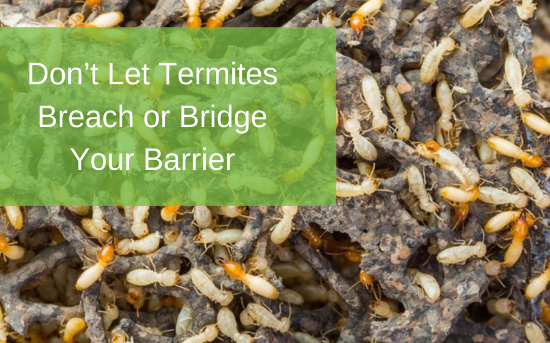 Don't Let Termites Breach or Bridge Your Barrier