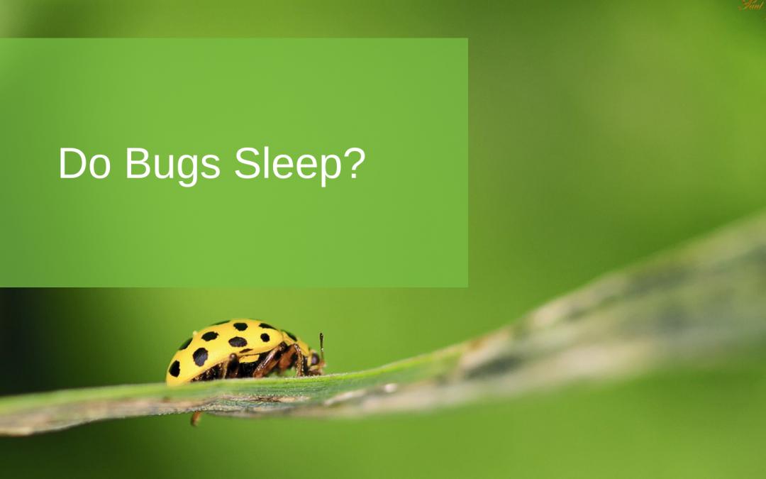 Do Bugs Sleep?