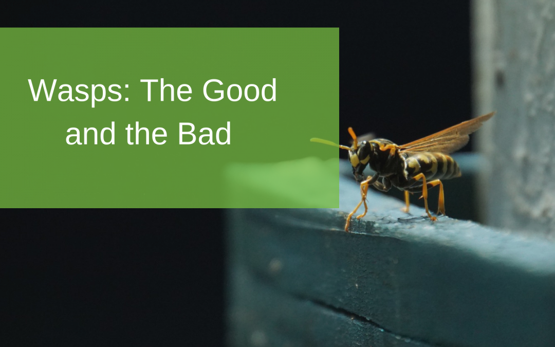 Wasps: The Good and the Bad
