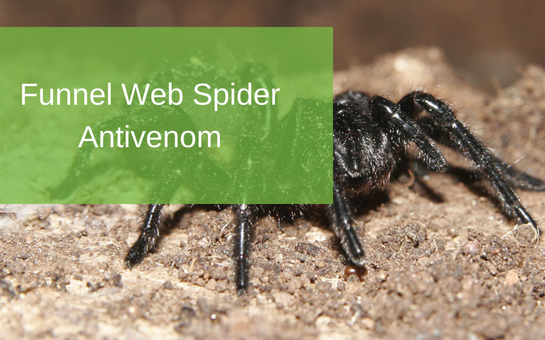 Funnel Web Spider Antivenom