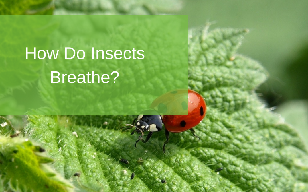 How Do Insects Breathe?