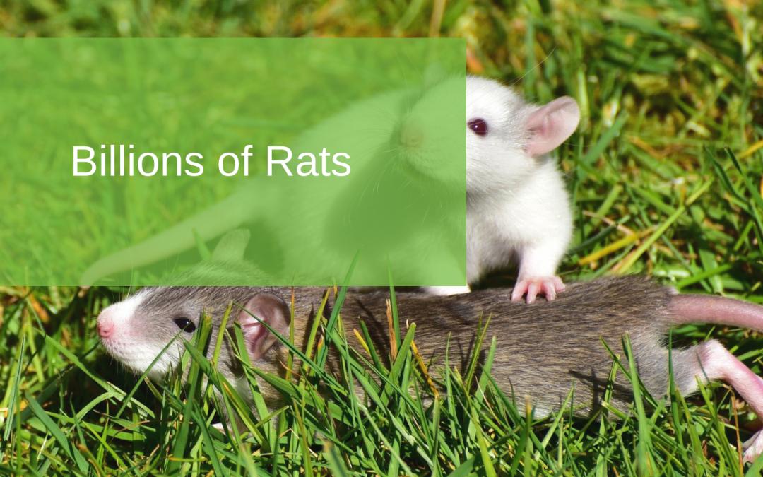 Billions of Rats