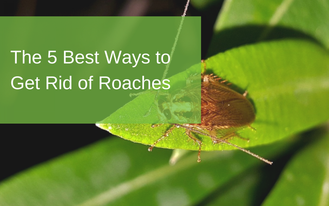 The 5 Best Ways to Get Rid of Roaches