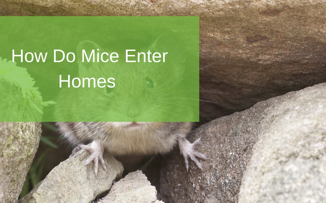 How Do Mice Enter Homes