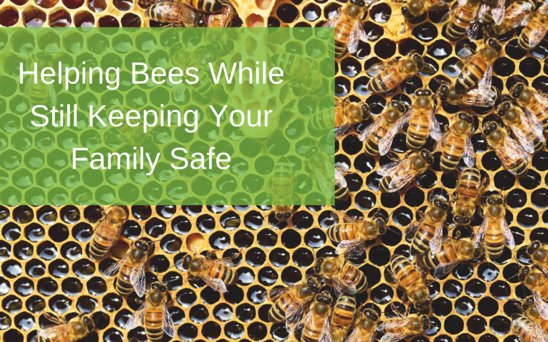 Helping Bees While Still Keeping Your Family Safe