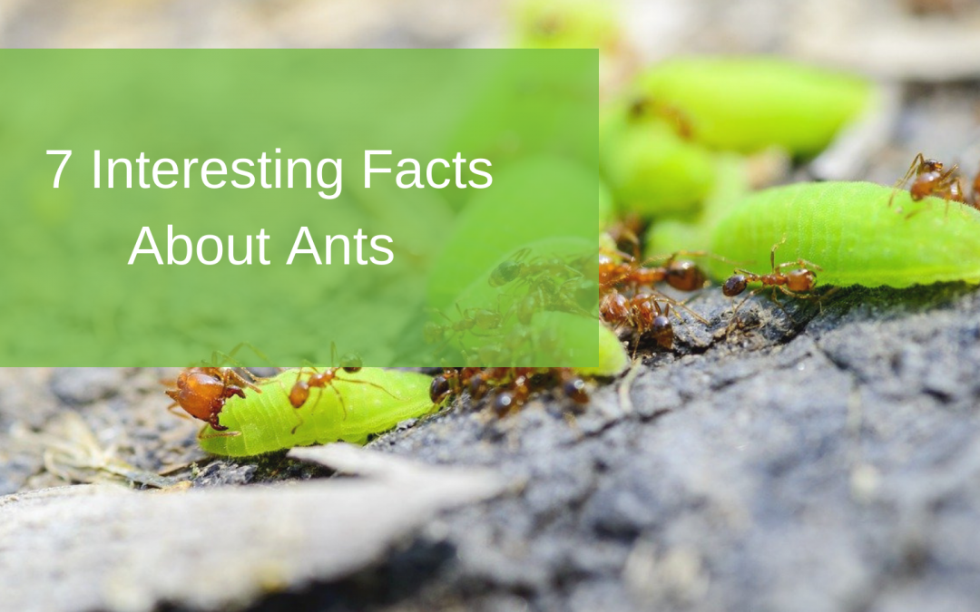 7 Interesting Facts About Ants