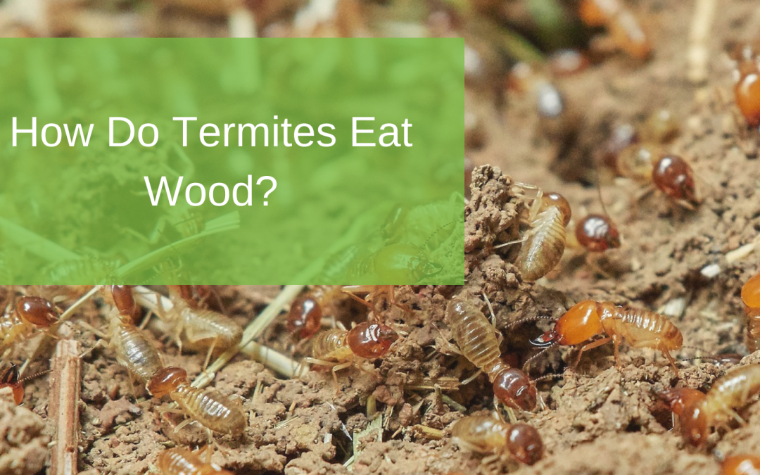 How Do Termites Eat Wood?