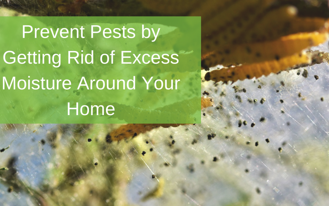 Prevent Pests by Getting Rid of Excess Moisture Around Your Home