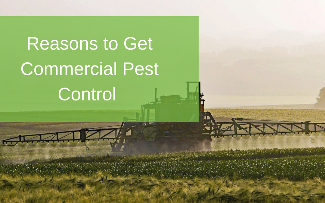 Reasons to Get Commercial Pest Control