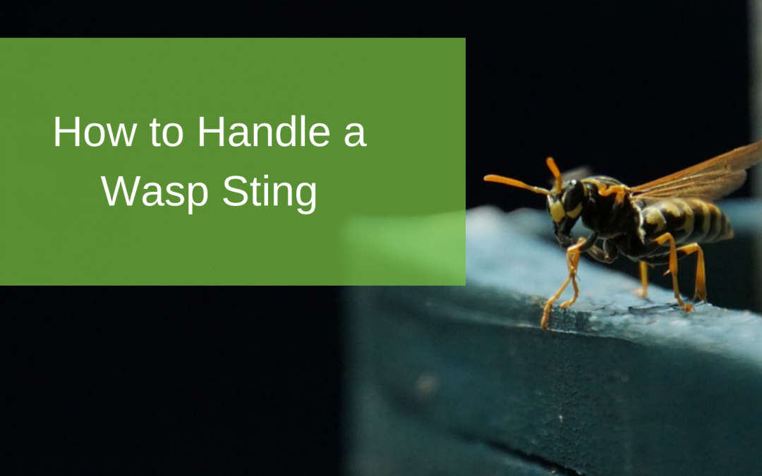 How to Handle a Wasp Sting