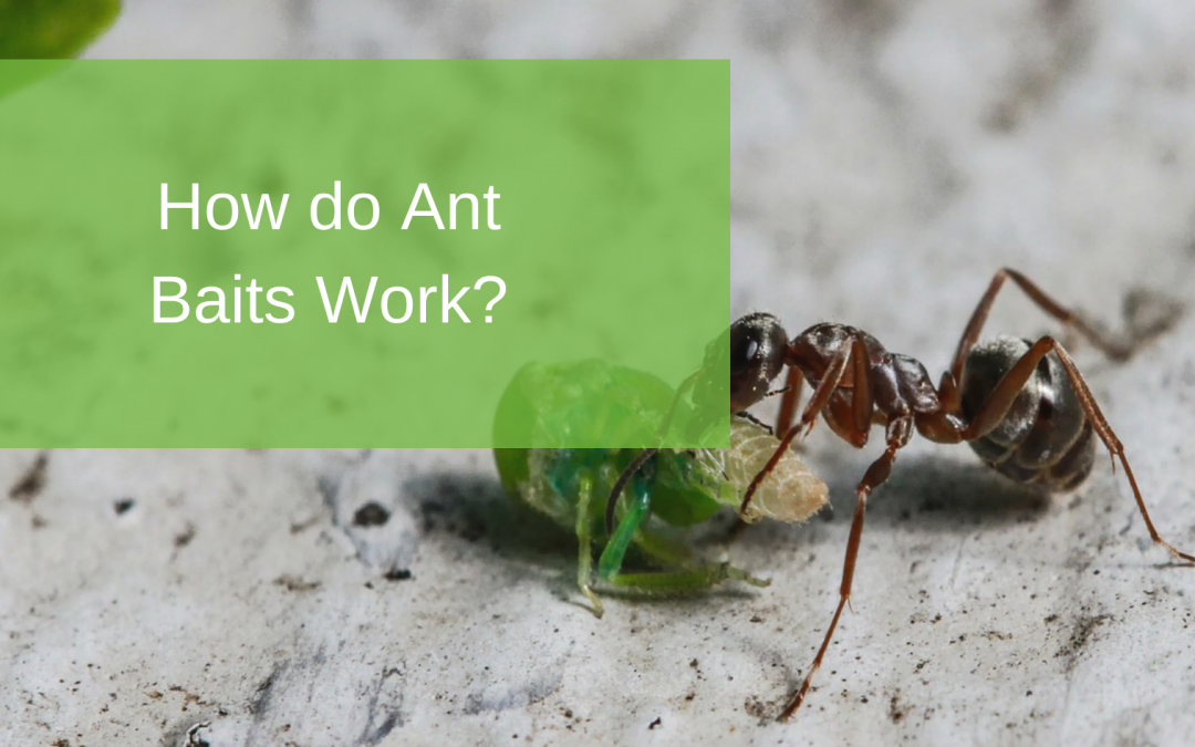 How Do Ant Baits Work?