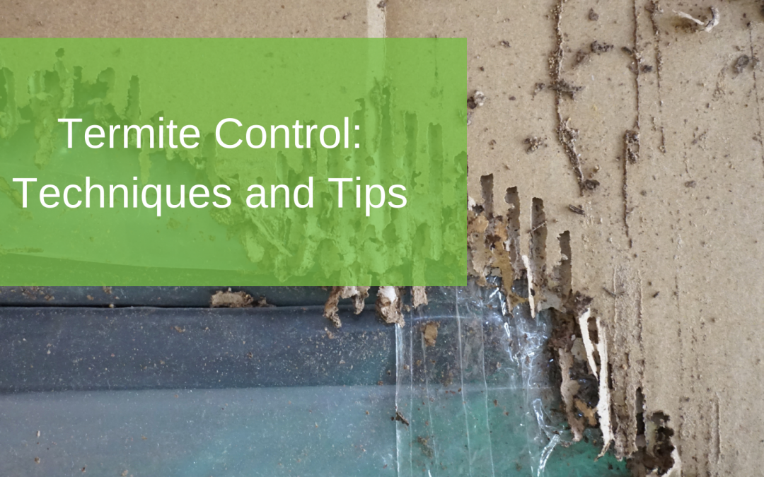 Termite Control Techniques and Tips