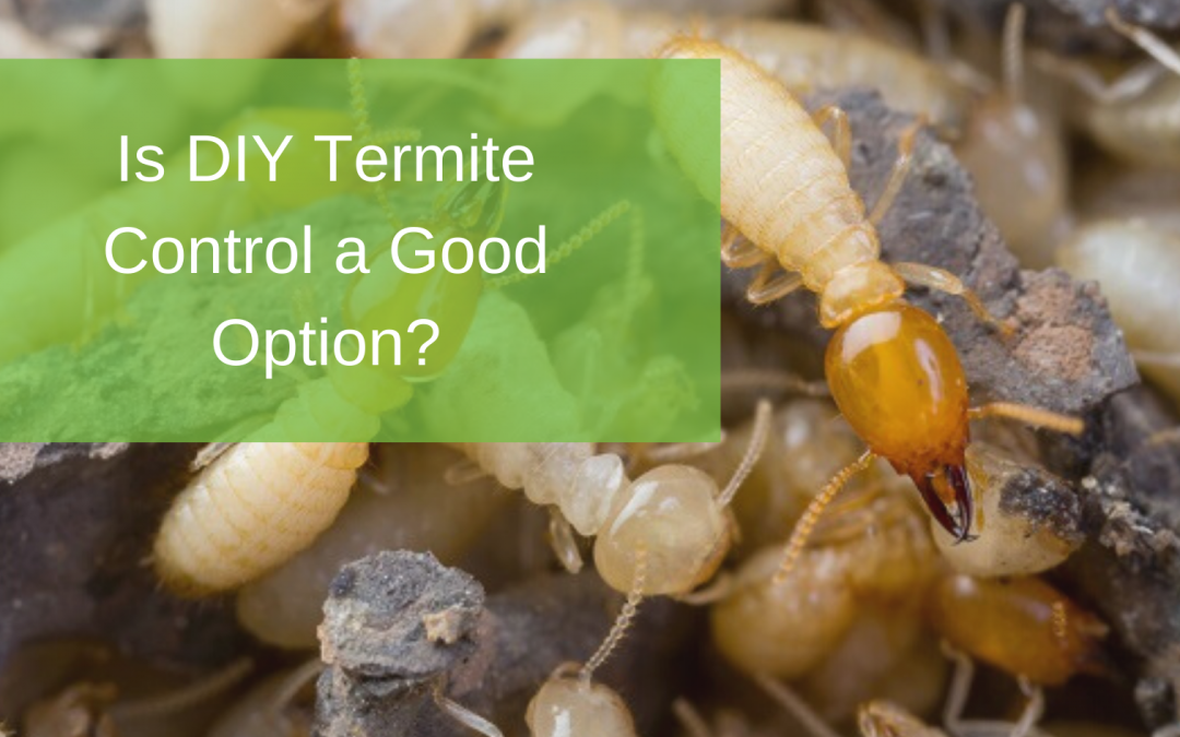 Is DIY Termite Control a Good Option?