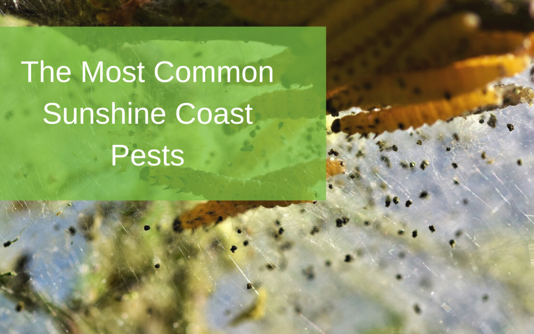 The Most Common Sunshine Coast Pests
