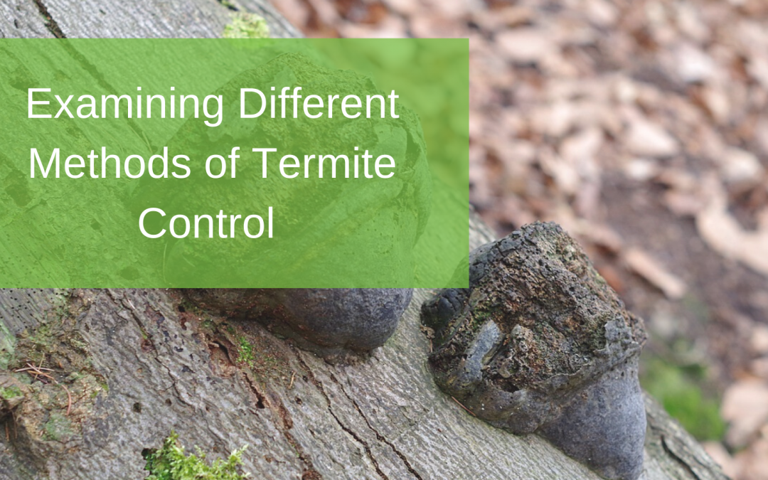 Examining Different Methods of Termite Control