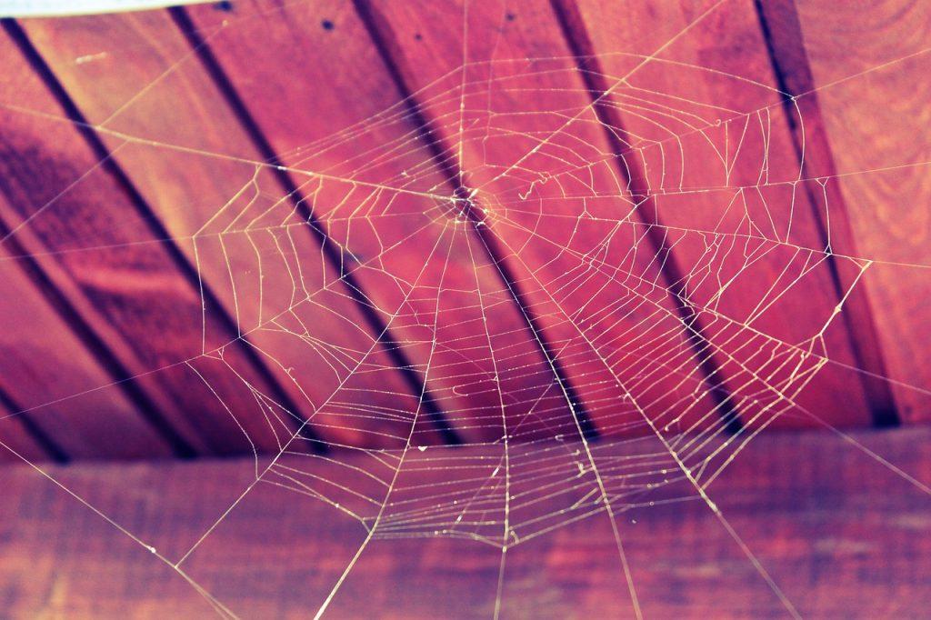 cob web
