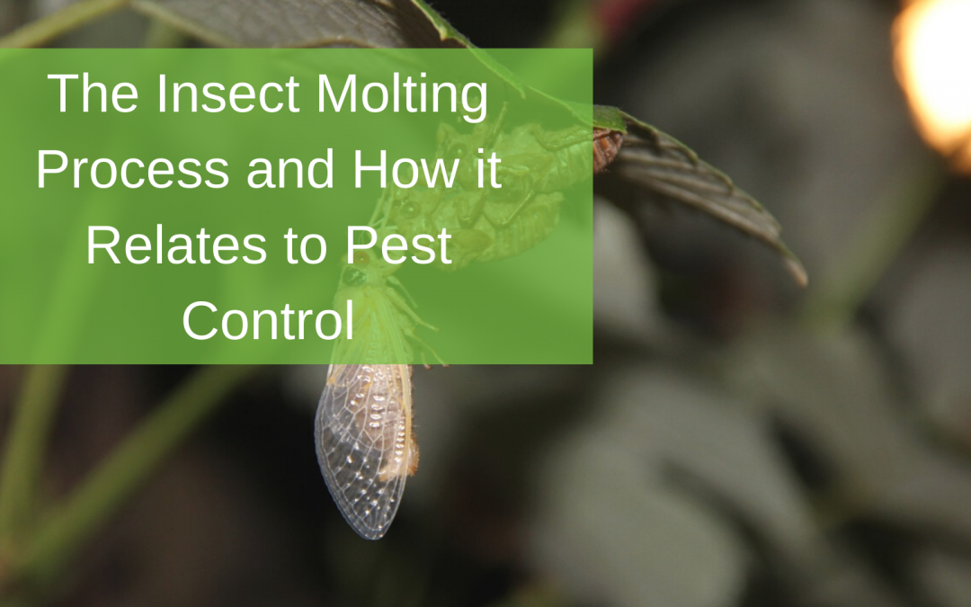 The Insect Molting Process and How it Relates to Pest Control