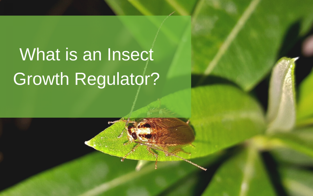 What is an Insect Growth Regulator?