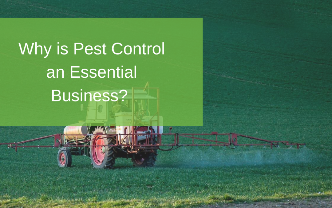 Why is Pest Control an Essential Business?